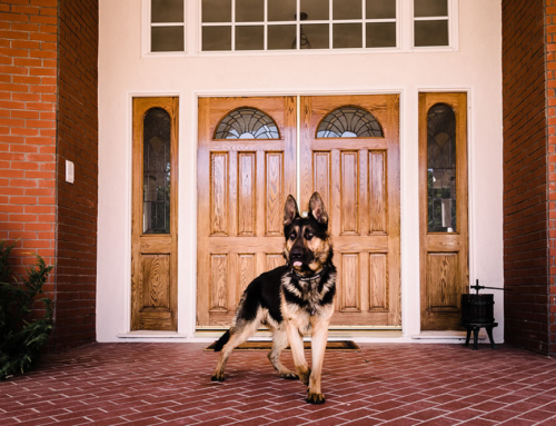 What's it Like to Own a Protection Dog?